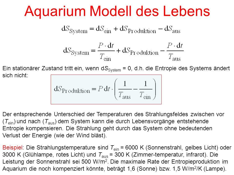 Aquarium Modell des Lebens Ein stationärer Zustand tritt ein, wenn dS System = 0, d.h. die Entropie des Systems ändert sich nicht: Der entsprechende U