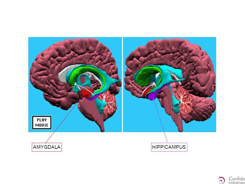 Hippocampus Amygdala Explizite Erinnerungen an emotionale Situationen Konkrete Erinnerungen - an die Situation / Kontext - an Zeit - an Personen Einbettung in Konstrukte - Bedeutung, Wertung, … Implizite emotionale Erinnerungen Empfindung der Sympathikuswirkungen - Erregung - Muskeln - Atmung - Haut...