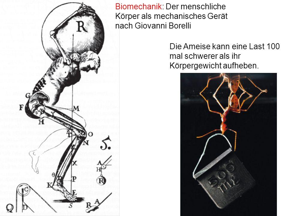 Biomechanik: Der menschliche Körper als mechanisches Gerät nach Giovanni Borelli Die Ameise kann eine Last 100 mal schwerer als ihr Körpergewicht aufh