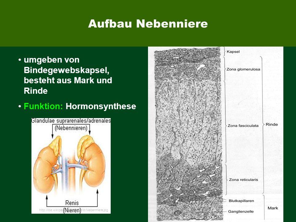 EUROIMMUN umgeben von Bindegewebskapsel, besteht aus Mark und Rinde Funktion: Hormonsynthese http://de.wikipedia.org/wiki/Bild:Nebenniere.jpg Aufbau N