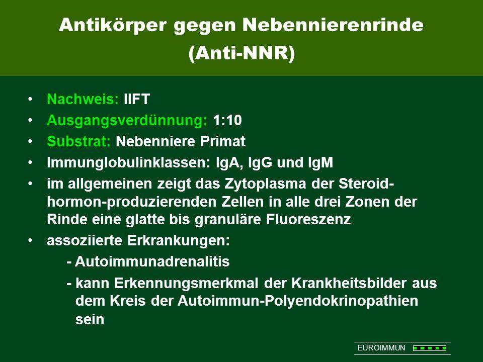 EUROIMMUN Nachweis: IIFT Ausgangsverdünnung: 1:10 Substrat: Nebenniere Primat Immunglobulinklassen: IgA, IgG und IgM im allgemeinen zeigt das Zytoplas