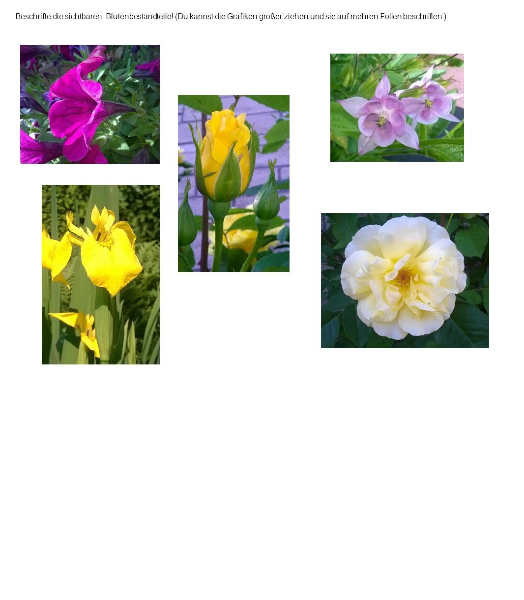 Beschrifte die sichtbaren Blütenbestandteile.