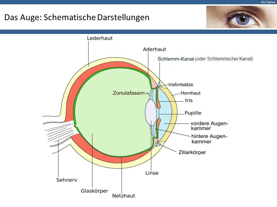 03 / Sehen Das Auge: Schematische Darstellungen (oder Schlemmscher Kanal)