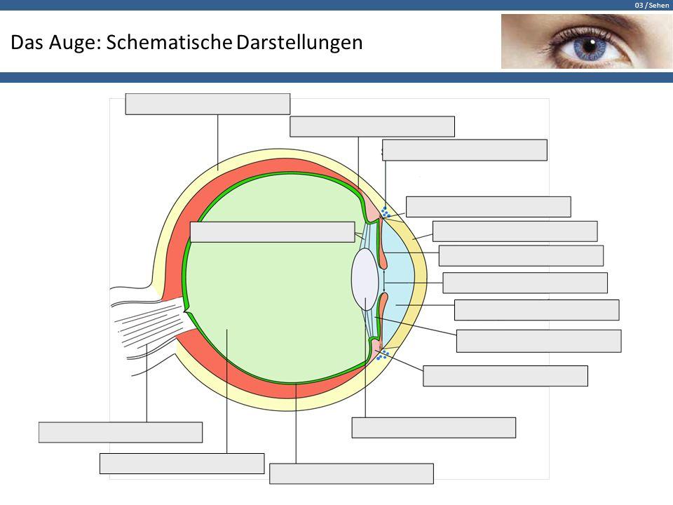 03 / Sehen Das Auge: Schematische Darstellungen