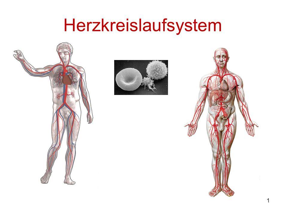 12 Die Schlagadern (Arterien)und Haargefäße(Kapillaren) Die Blutgefäße Die Blutgefäße fungieren innerhalb des Blutkreislaufs als Transportbahnen für das Blut vom Herzen zu den verschiedenen Körpergeweben und Organen und zurück.
