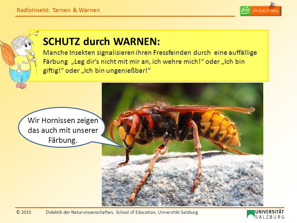 RadioInsekt: Tarnen & Warnen © 2015Didaktik der Naturwissenschaften, School of Education, Universität Salzburg SCHUTZ durch WARNEN: Manche Insekten si