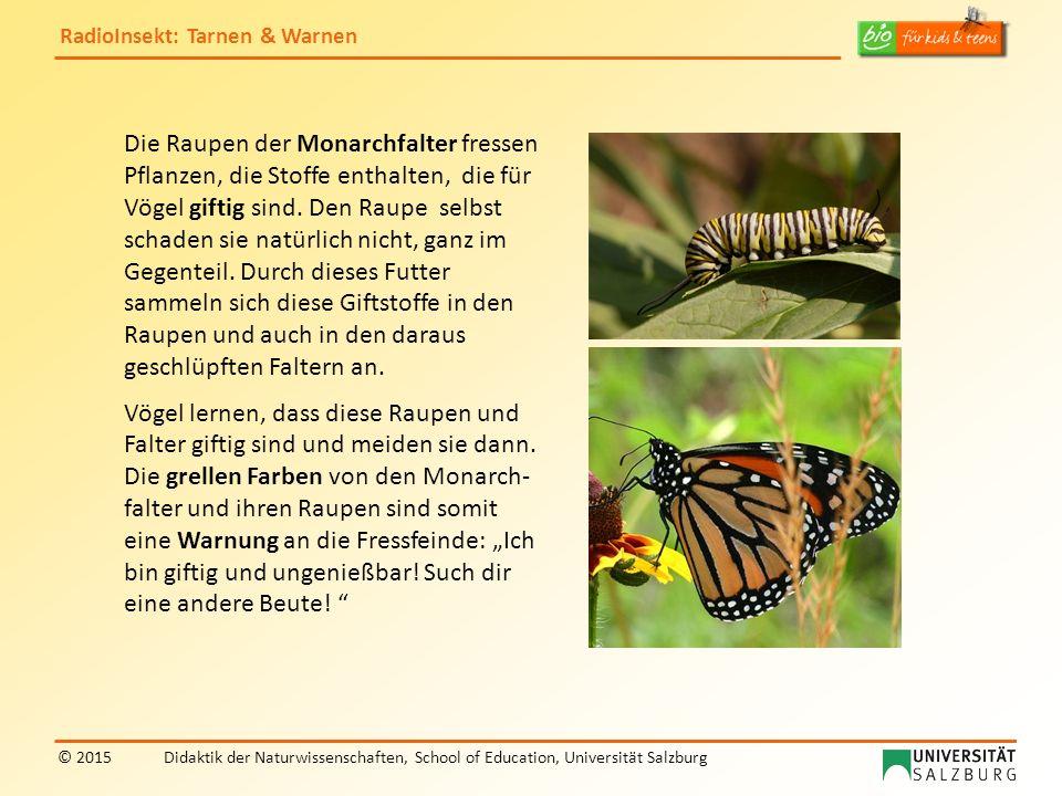 RadioInsekt: Tarnen & Warnen © 2015Didaktik der Naturwissenschaften, School of Education, Universität Salzburg Die Raupen der Monarchfalter fressen Pf