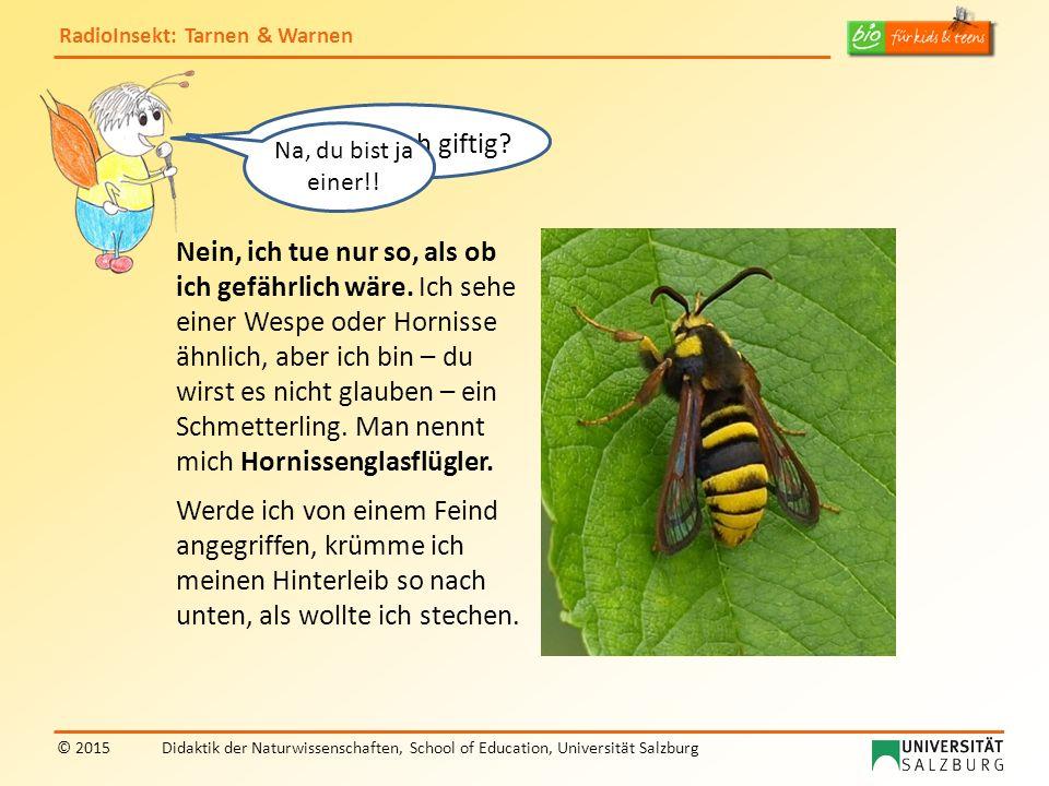 RadioInsekt: Tarnen & Warnen © 2015Didaktik der Naturwissenschaften, School of Education, Universität Salzburg Bist du auch giftig? Nein, ich tue nur