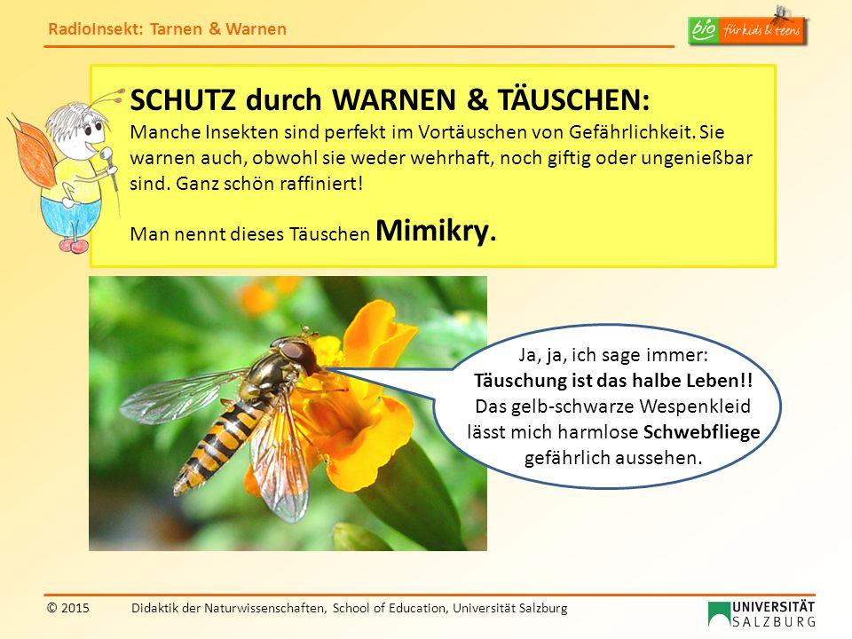 RadioInsekt: Tarnen & Warnen © 2015Didaktik der Naturwissenschaften, School of Education, Universität Salzburg SCHUTZ durch WARNEN & TÄUSCHEN: Manche