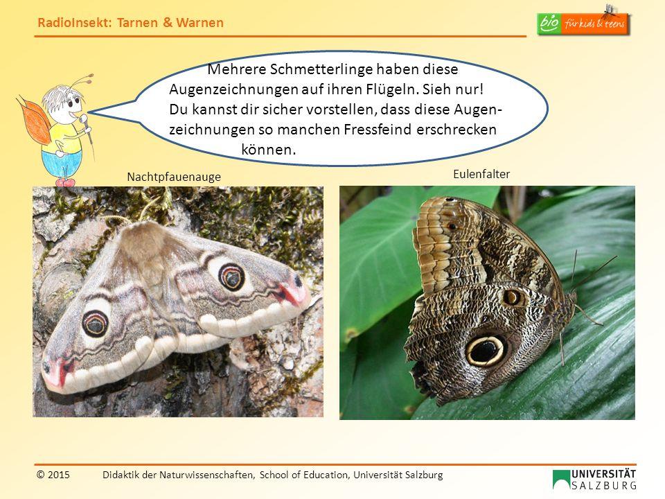 RadioInsekt: Tarnen & Warnen © 2015Didaktik der Naturwissenschaften, School of Education, Universität Salzburg Mehrere Schmetterlinge haben diese Auge