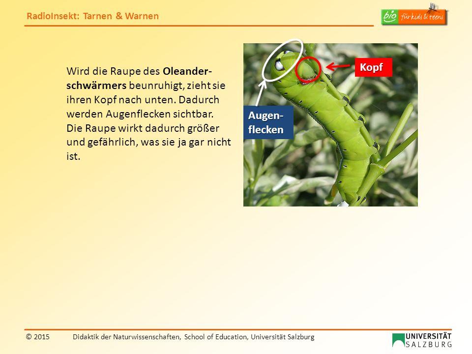 RadioInsekt: Tarnen & Warnen © 2015Didaktik der Naturwissenschaften, School of Education, Universität Salzburg Wird die Raupe des Oleander- schwärmers