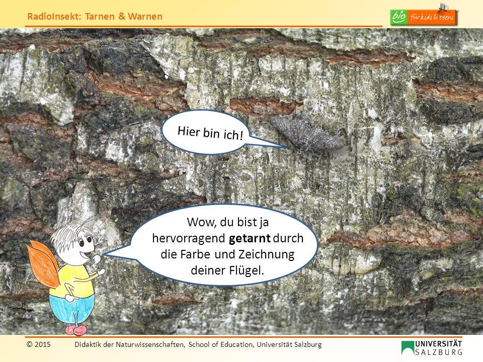 RadioInsekt: Tarnen & Warnen © 2015Didaktik der Naturwissenschaften, School of Education, Universität Salzburg Hier würde mich jeder hungrige Vogel sofort entdecken.