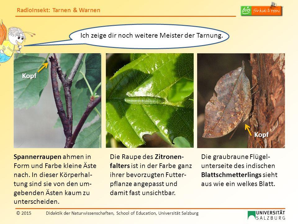 RadioInsekt: Tarnen & Warnen © 2015Didaktik der Naturwissenschaften, School of Education, Universität Salzburg Hier siehst du weitere Beispiele für Mimikry bei zwei Schwebfliegen und einem Käfer.
