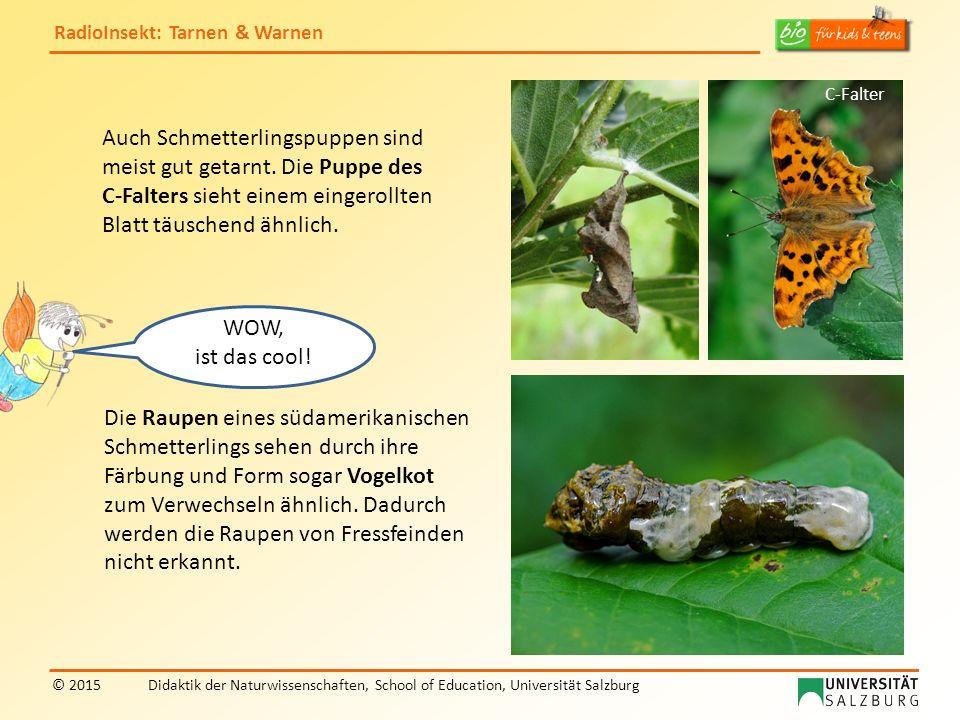 RadioInsekt: Tarnen & Warnen © 2015Didaktik der Naturwissenschaften, School of Education, Universität Salzburg Grünes Heupferd Meine Färbung ist natürlich auch eine ausgezeichnete Tarnung.