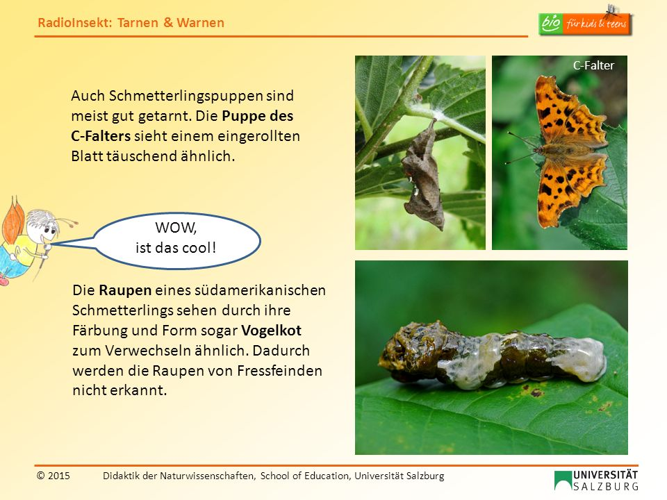 RadioInsekt: Tarnen & Warnen © 2015Didaktik der Naturwissenschaften, School of Education, Universität Salzburg BUHHH….