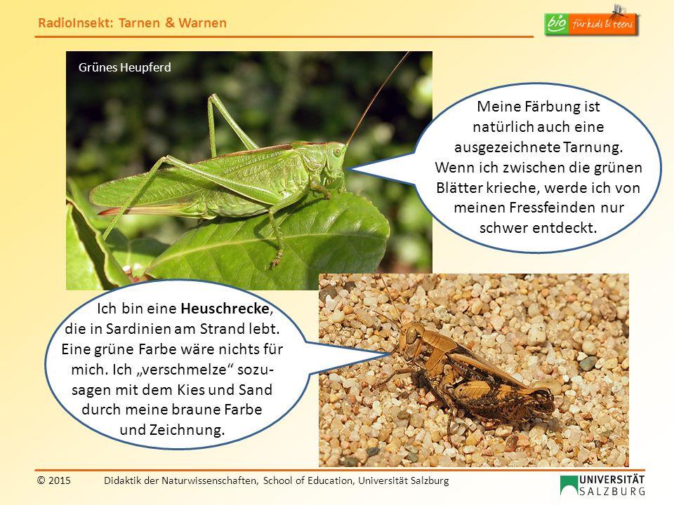RadioInsekt: Tarnen & Warnen © 2015Didaktik der Naturwissenschaften, School of Education, Universität Salzburg Na, und wir erst!.