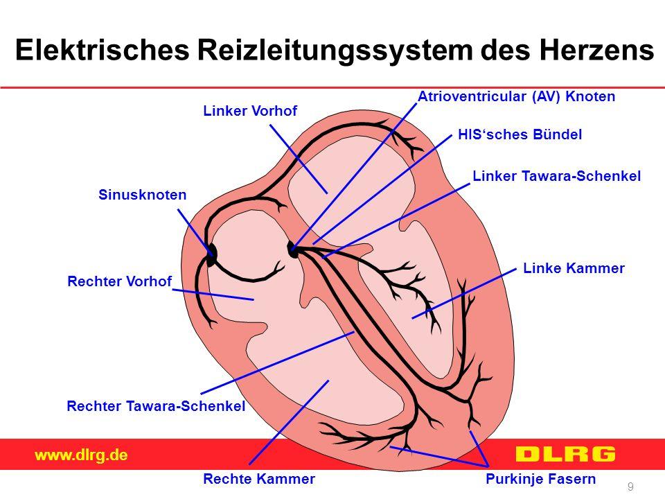 www.dlrg.de 9 Elektrisches Reizleitungssystem des Herzens Linker Vorhof Atrioventricular (AV) Knoten HIS'sches Bündel Linker Tawara-Schenkel Linke Kam