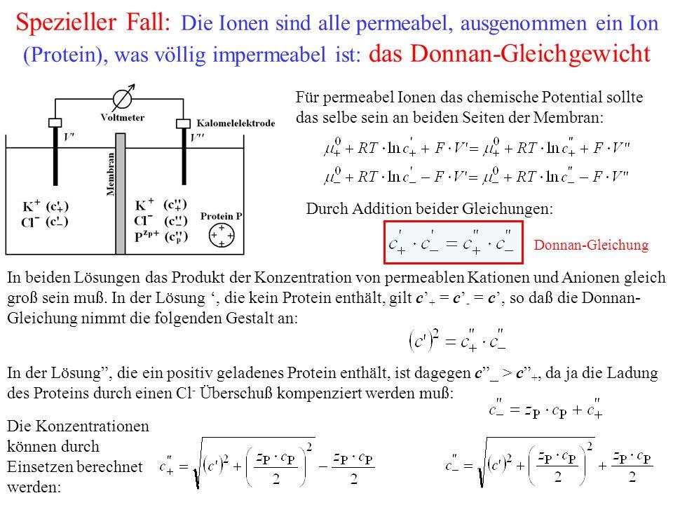 Spezieller Fall: Die Ionen sind alle permeabel, ausgenommen ein Ion (Protein), was völlig impermeabel ist: das Donnan-Gleichgewicht Für permeabel Ionen das chemische Potential sollte das selbe sein an beiden Seiten der Membran: Durch Addition beider Gleichungen: Donnan-Gleichung In beiden Lösungen das Produkt der Konzentration von permeablen Kationen und Anionen gleich groß sein muß.