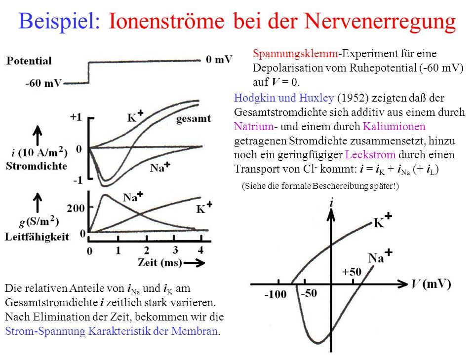 Beispiel: Ionenströme bei der Nervenerregung Spannungsklemm-Experiment für eine Depolarisation vom Ruhepotential (-60 mV) auf V = 0. Hodgkin und Huxle