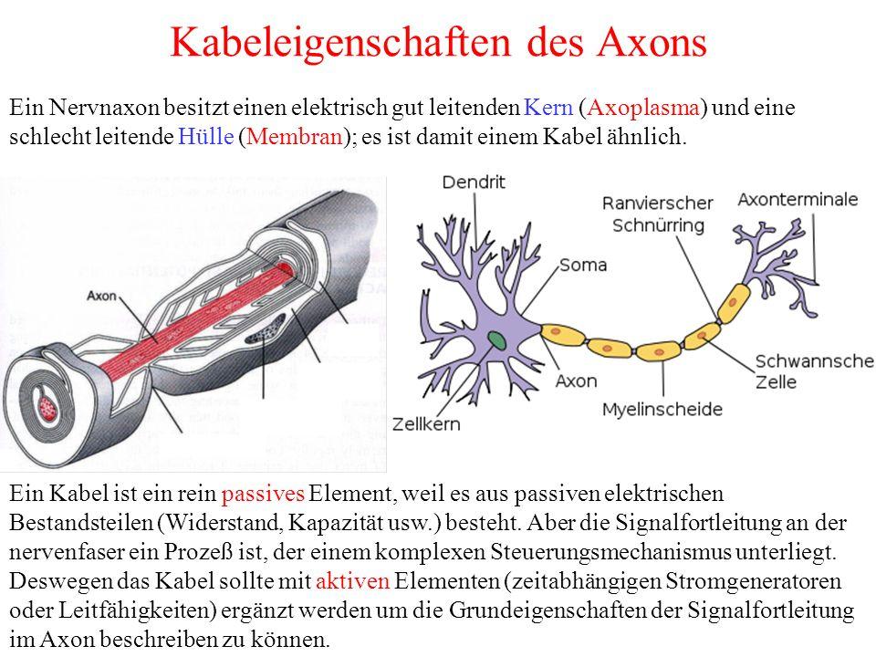 Kabeleigenschaften des Axons Ein Nervnaxon besitzt einen elektrisch gut leitenden Kern (Axoplasma) und eine schlecht leitende Hülle (Membran); es ist damit einem Kabel ähnlich.