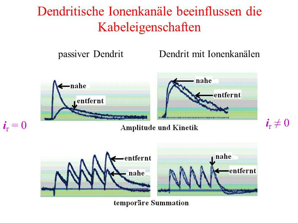 Dendritische Ionenkanäle beeinflussen die Kabeleigenschaften passiver DendritDendrit mit Ionenkanälen i r = 0 i r ≠ 0