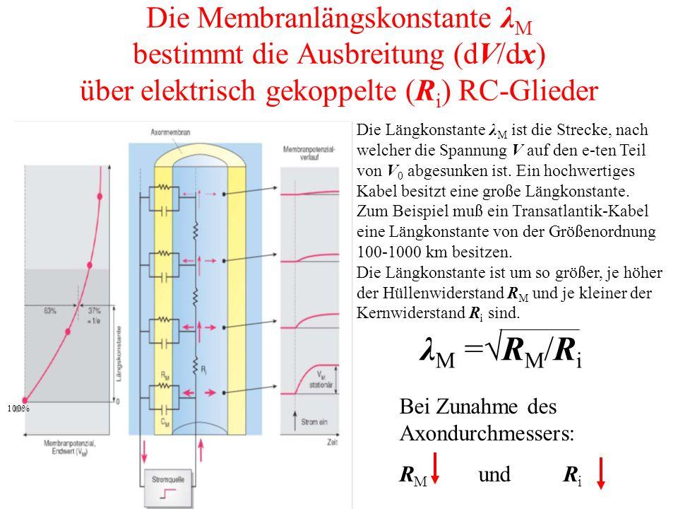 Die Membranlängskonstante λ M bestimmt die Ausbreitung (dV/dx) über elektrisch gekoppelte (R i ) RC-Glieder λ M =√R M /R i Bei Zunahme des Axondurchmessers: R M und R i Die Längkonstante λ M ist die Strecke, nach welcher die Spannung V auf den e-ten Teil von V 0 abgesunken ist.