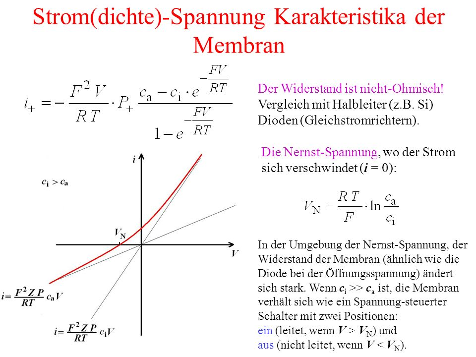 Mehrere Ionen (K +, Na + und Cl - ) mit unterschiedlichen Permeabilitätskoeffizienten: das Goldman-Potential Die Komponenten der gesamten Ionstromdichte: Die totale Stromdichte: i = i K + i Na + i Cl Das Ruhepotential, wenn kein Strom fließt (i = 0):