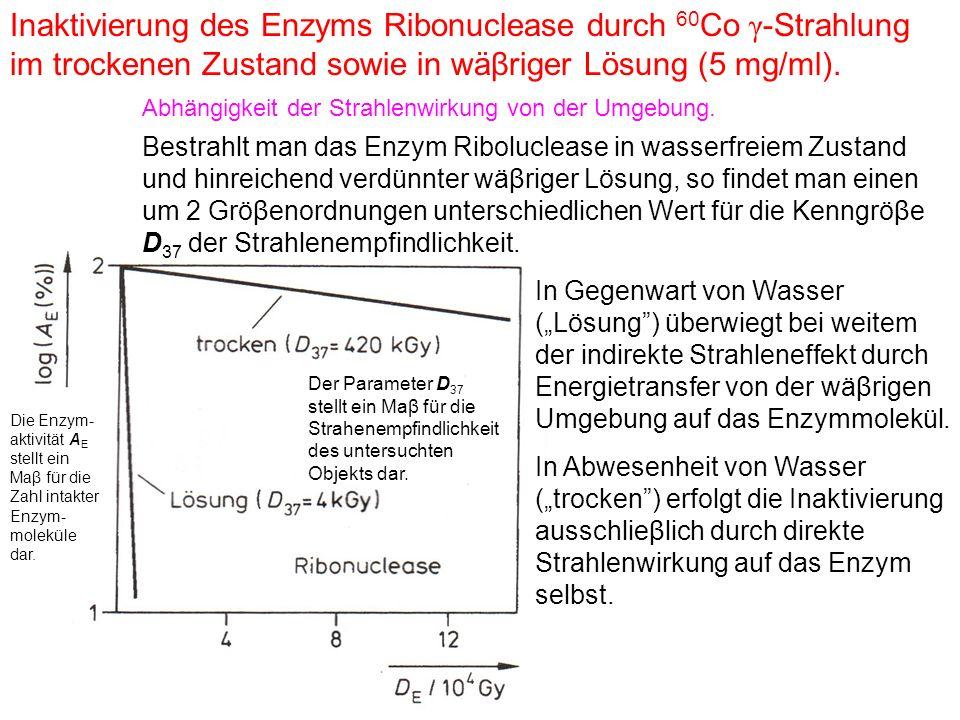 Inaktivierung des Enzyms Ribonuclease durch 60 Co γ -Strahlung im trockenen Zustand sowie in wäβriger Lösung (5 mg/ml). Abhängigkeit der Strahlenwirku