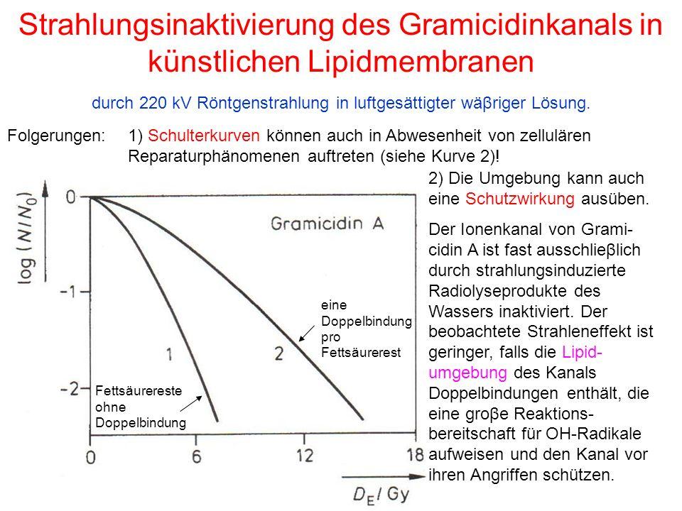 Strahlungsinaktivierung des Gramicidinkanals in künstlichen Lipidmembranen durch 220 kV Röntgenstrahlung in luftgesättigter wäβriger Lösung. Fettsäure