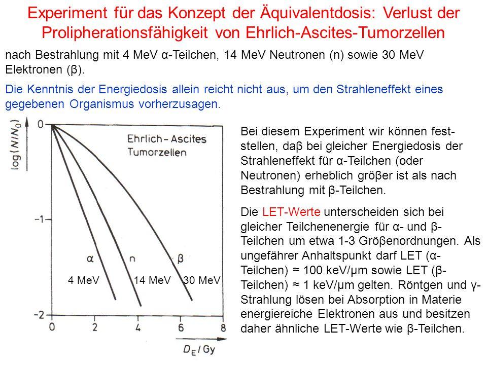 nach Bestrahlung mit 4 MeV α-Teilchen, 14 MeV Neutronen (n) sowie 30 MeV Elektronen (β). Experiment für das Konzept der Äquivalentdosis: Verlust der P