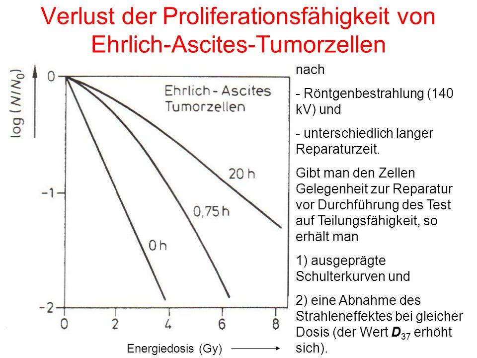 Verlust der Proliferationsfähigkeit von Ehrlich-Ascites-Tumorzellen Energiedosis (Gy) nach - Röntgenbestrahlung (140 kV) und - unterschiedlich langer