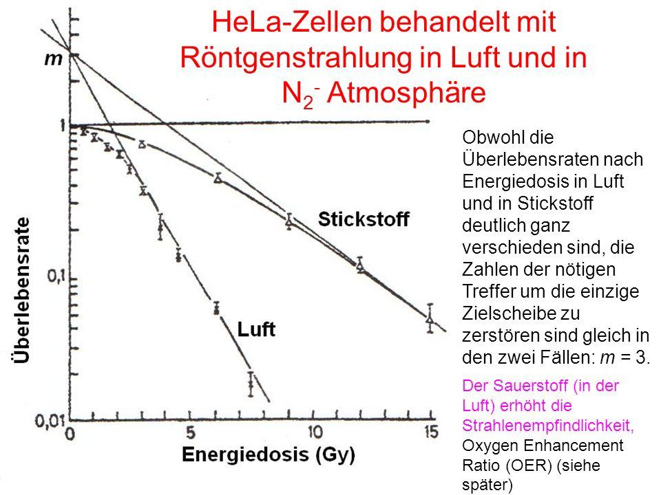 HeLa-Zellen behandelt mit Röntgenstrahlung in Luft und in N 2 - Atmosphäre Obwohl die Überlebensraten nach Energiedosis in Luft und in Stickstoff deut