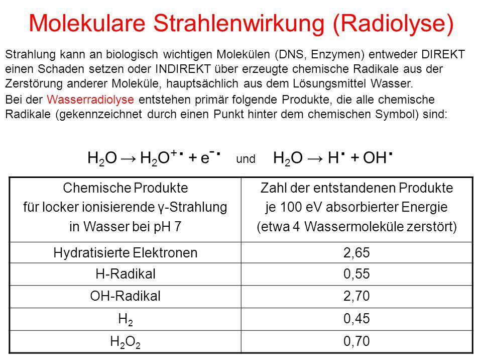 Molekulare Strahlenwirkung (Radiolyse) Strahlung kann an biologisch wichtigen Molekülen (DNS, Enzymen) entweder DIREKT einen Schaden setzen oder INDIR