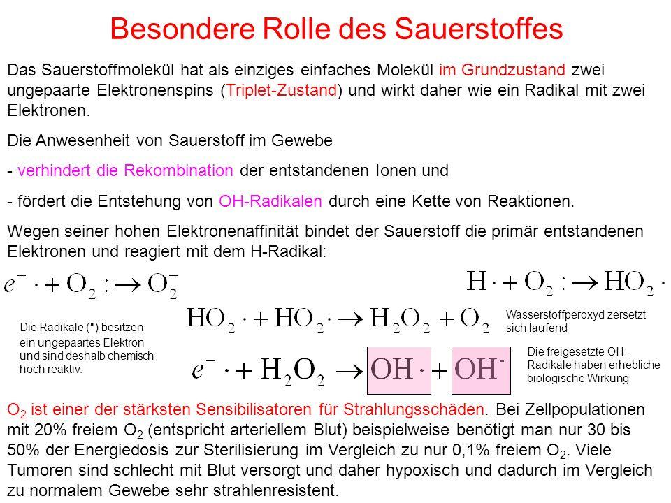 Besondere Rolle des Sauerstoffes Das Sauerstoffmolekül hat als einziges einfaches Molekül im Grundzustand zwei ungepaarte Elektronenspins (Triplet-Zus