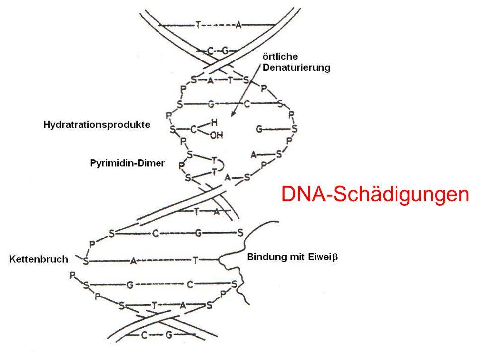 DNA-Schädigungen
