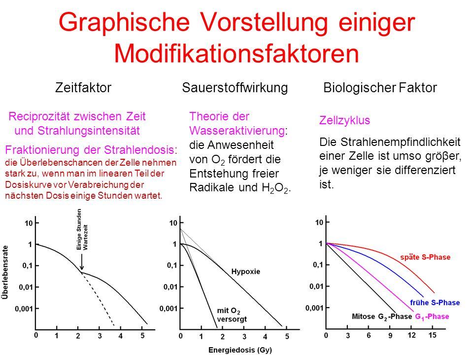 Graphische Vorstellung einiger Modifikationsfaktoren ZeitfaktorSauerstoffwirkungBiologischer Faktor Reciprozität zwischen Zeit und Strahlungsintensitä