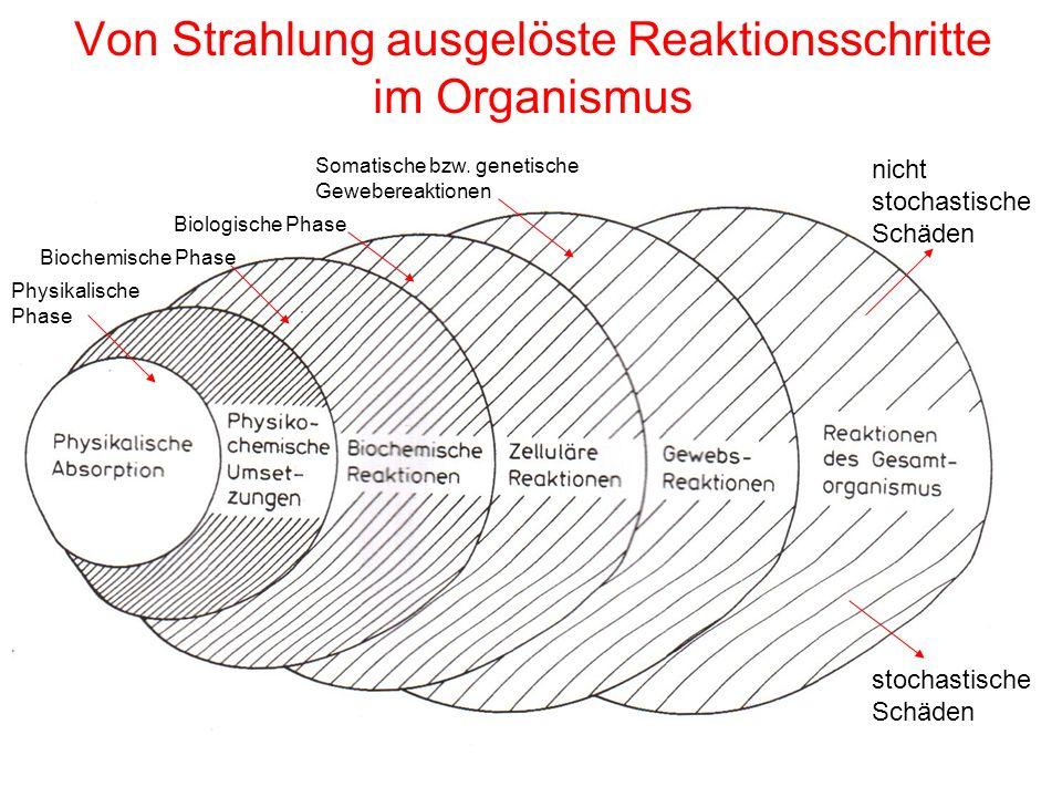 Von Strahlung ausgelöste Reaktionsschritte im Organismus nicht stochastische Schäden stochastische Schäden Physikalische Phase Biochemische Phase Biol