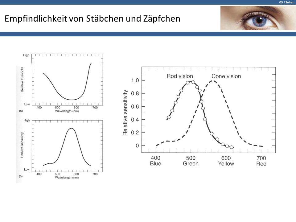 05 / Sehen Empfindlichkeit von Stäbchen und Zäpfchen Die Dichte der Photorezeptoren bestimmt die maximale Sehschärfe.