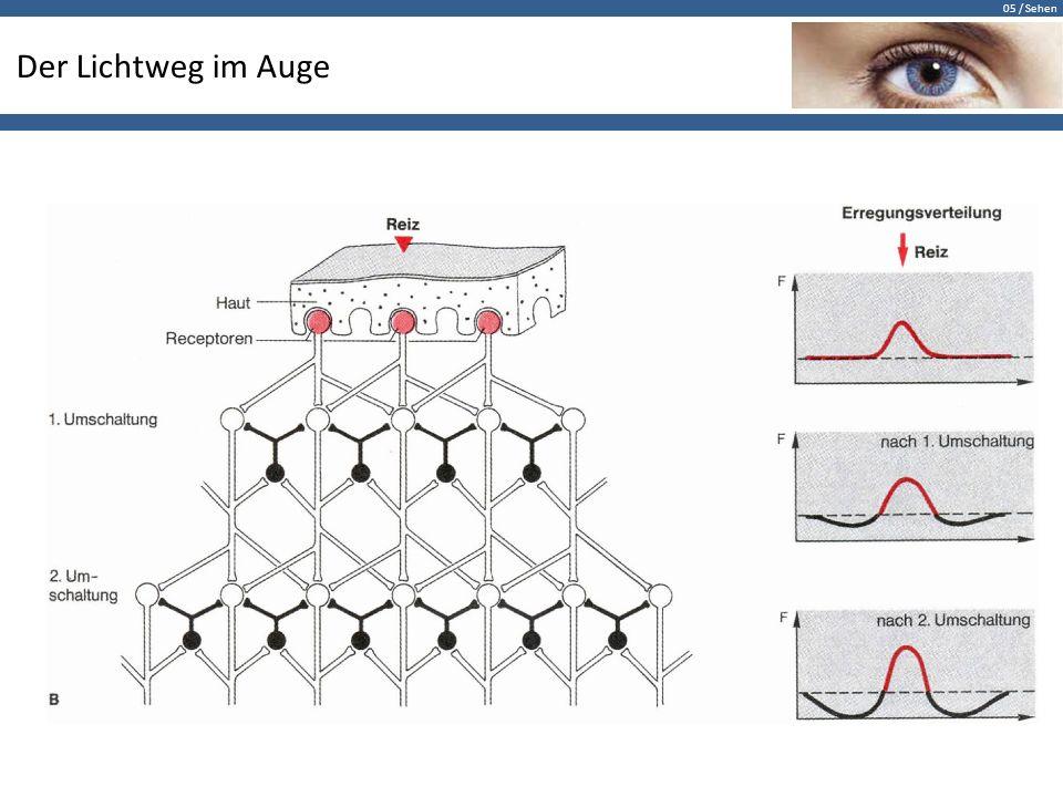 05 / Sehen Zusammenfassung Das Auge ist optimal auf wechselnde Bedingungen abgestimmt:  Fokussierung von Objekten unterschiedlicher Entfernung  Anpassung an Beleuchtungsbedingungen über riesige Bereiche Das Konzept des Auges ermöglicht eine enorme Sehschärfe, ohne das Gesichtsfeld zu beschränken.