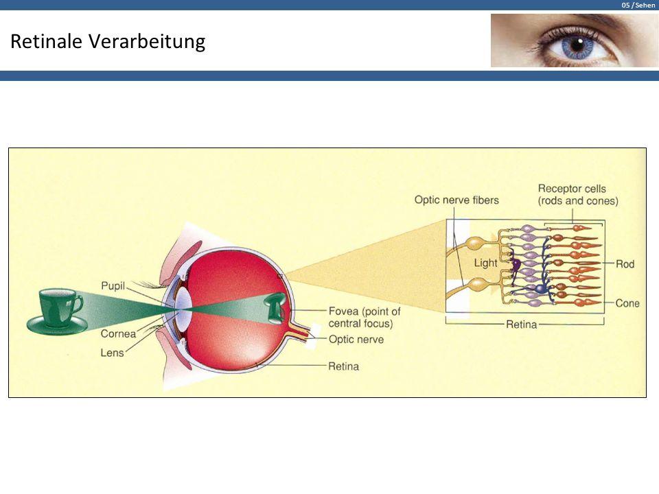 05 / Sehen Anatomie Auf der Netzhaut entsteht ein umgekehrtes Abbild unserer Umwelt.