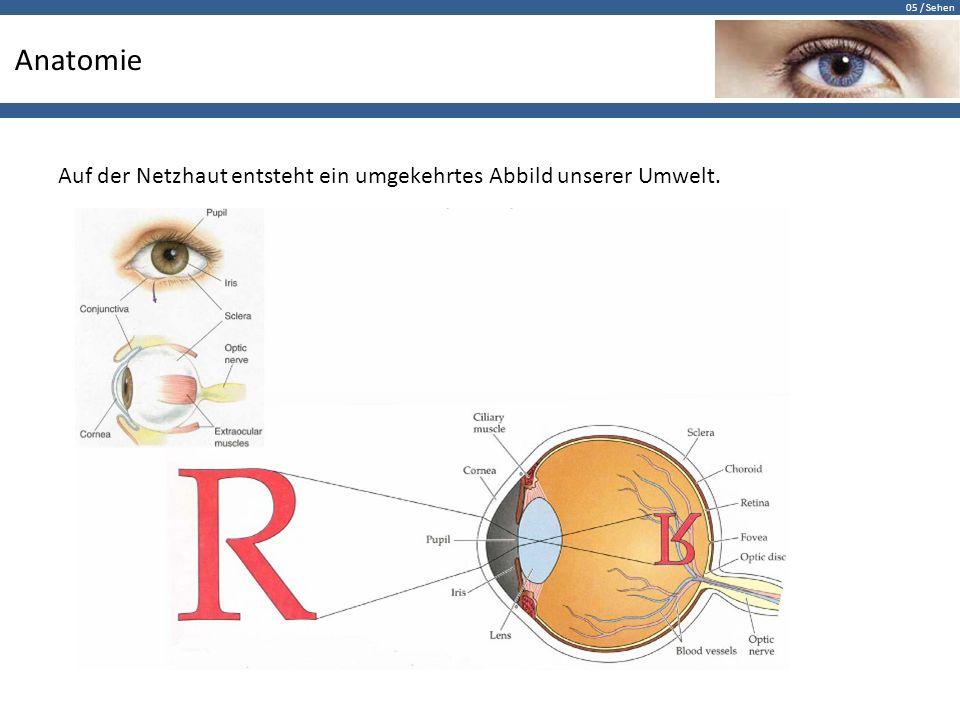 05 / Sehen Daumenregel der Netzhautbildgrösse Ein 2 cm breiter Daumen erzeugt bei gestrecktem Arm einen Sehwinkel von etwa 2º und eine Netzhautbildgrösse von 0,6 mm.