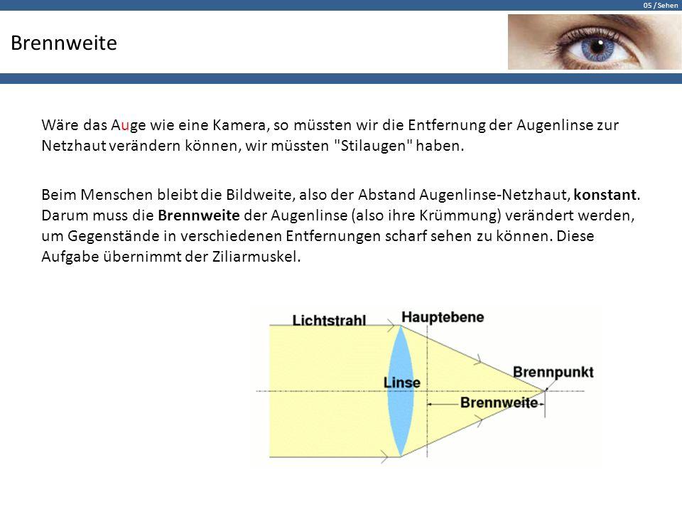05 / Sehen Brennweite Wäre das Auge wie eine Kamera, so müssten wir die Entfernung der Augenlinse zur Netzhaut verändern können, wir müssten