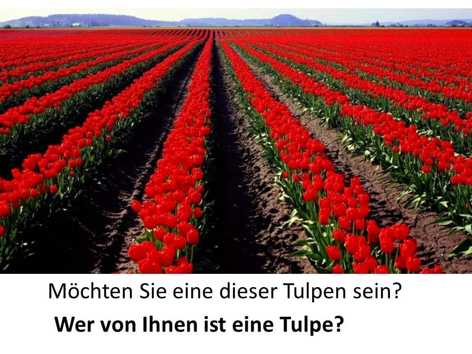 Möchten Sie eine dieser Tulpen sein? Wer von Ihnen ist eine Tulpe?