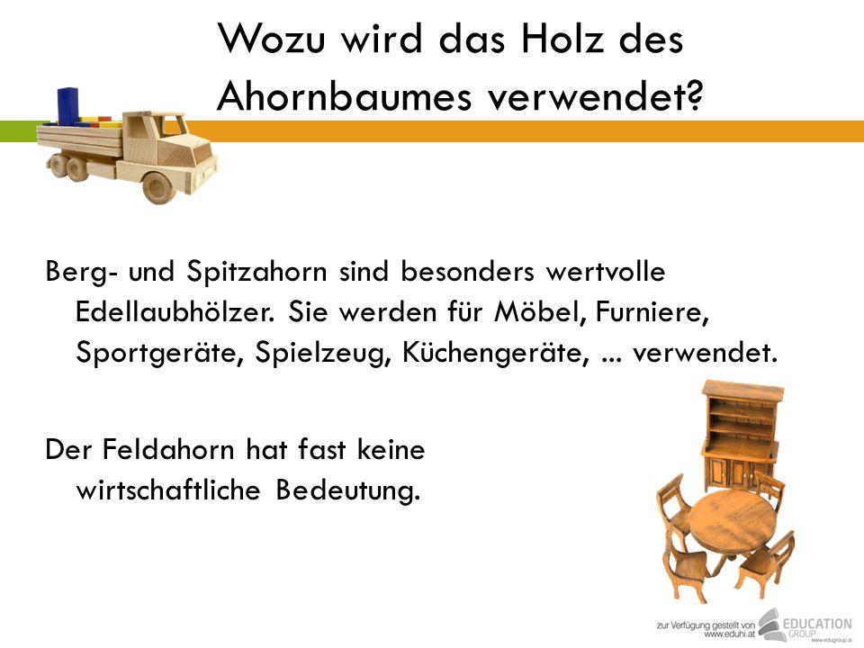 Wozu wird das Holz des Ahornbaumes verwendet? Berg- und Spitzahorn sind besonders wertvolle Edellaubhölzer. Sie werden für Möbel, Furniere, Sportgerät