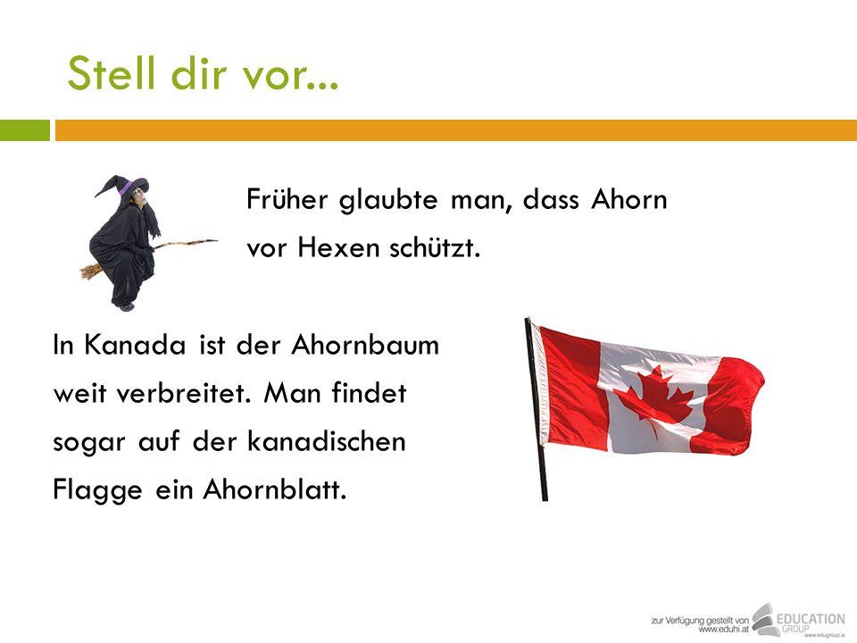 Stell dir vor... Früher glaubte man, dass Ahorn vor Hexen schützt. In Kanada ist der Ahornbaum weit verbreitet. Man findet sogar auf der kanadischen F