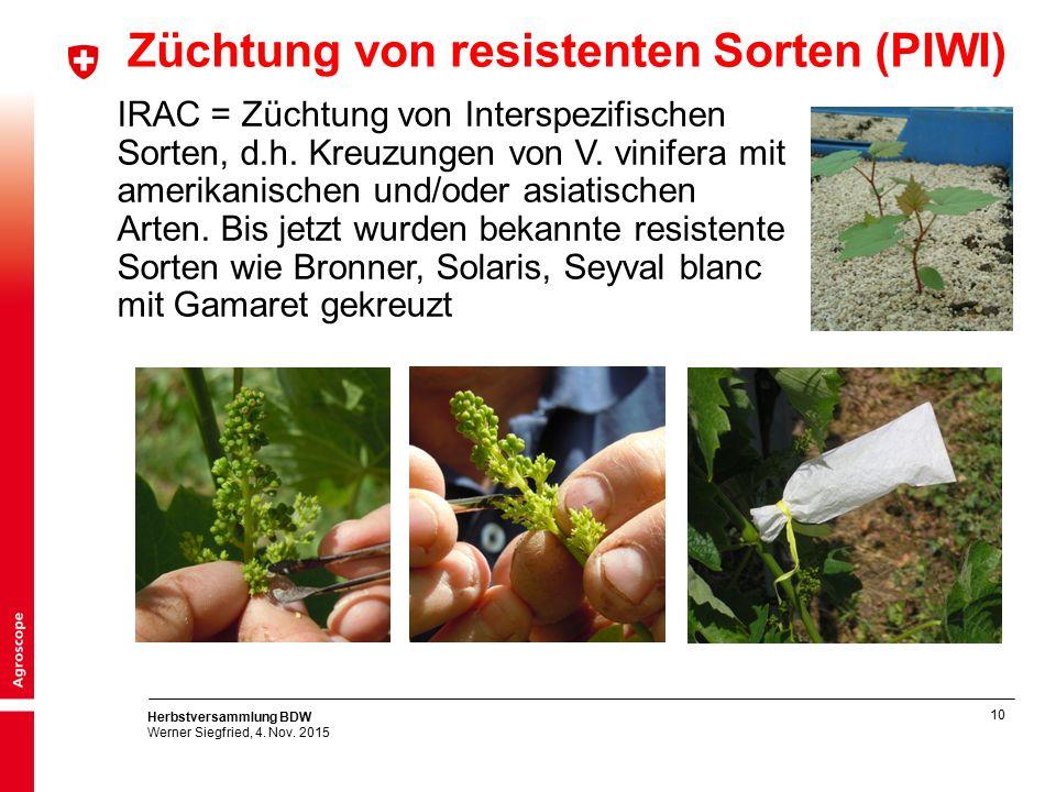 10 Herbstversammlung BDW Werner Siegfried, 4. Nov. 2015 Züchtung von resistenten Sorten (PIWI) IRAC = Züchtung von Interspezifischen Sorten, d.h. Kreu