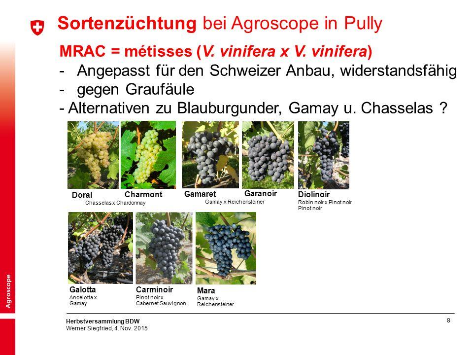 8 Herbstversammlung BDW Werner Siegfried, 4. Nov. 2015 MRAC = métisses (V. vinifera x V. vinifera) -Angepasst für den Schweizer Anbau, widerstandsfähi