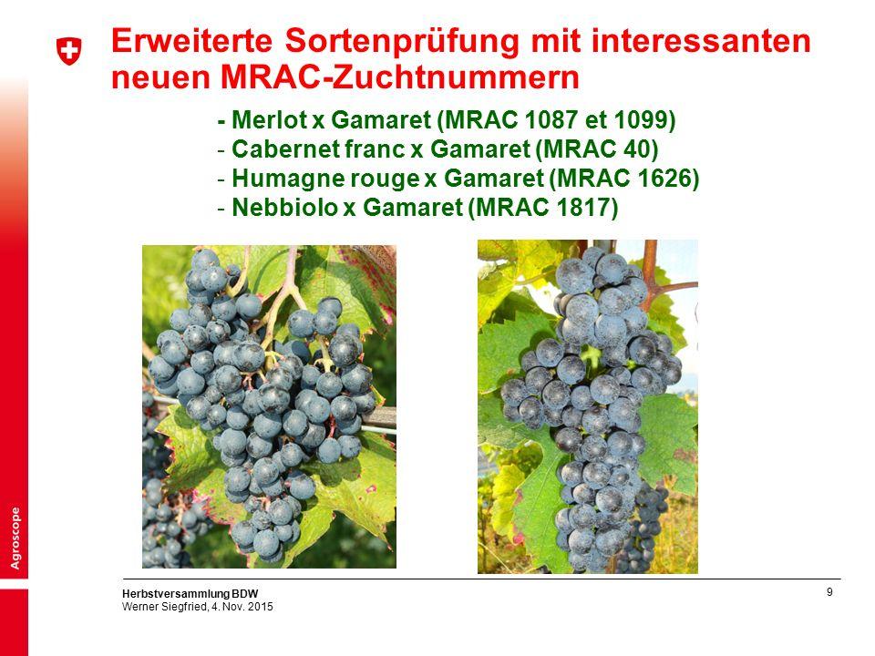 9 Herbstversammlung BDW Werner Siegfried, 4. Nov. 2015 - Merlot x Gamaret (MRAC 1087 et 1099) - Cabernet franc x Gamaret (MRAC 40) - Humagne rouge x G