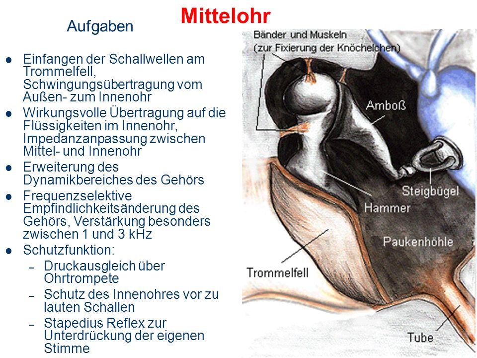 Das Mittelohr: Anatomie und Mechanik 1. Hammer 2. Amboss 3. Steigbügel 4. Trommelfell 5. Paukenfenster 6. Ohrtrompete