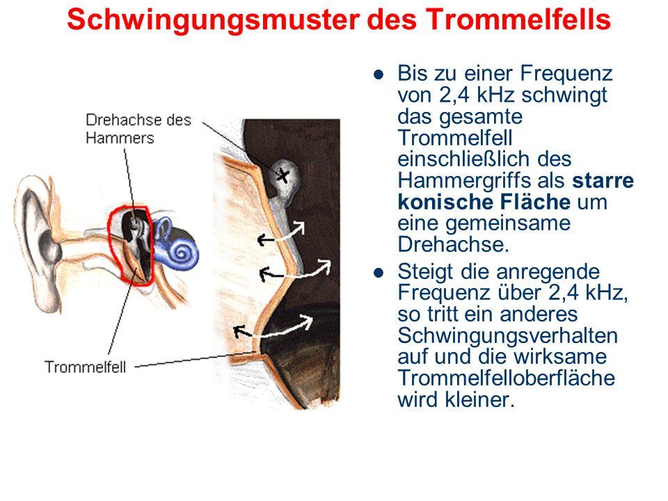 Schutzfunktion der Muskeln gegen hohen Schallpegeln Bei der Reaktion auf zu laute Schallereignisse benötigen die Muskeln eine gewisse Ansprechzeit (La